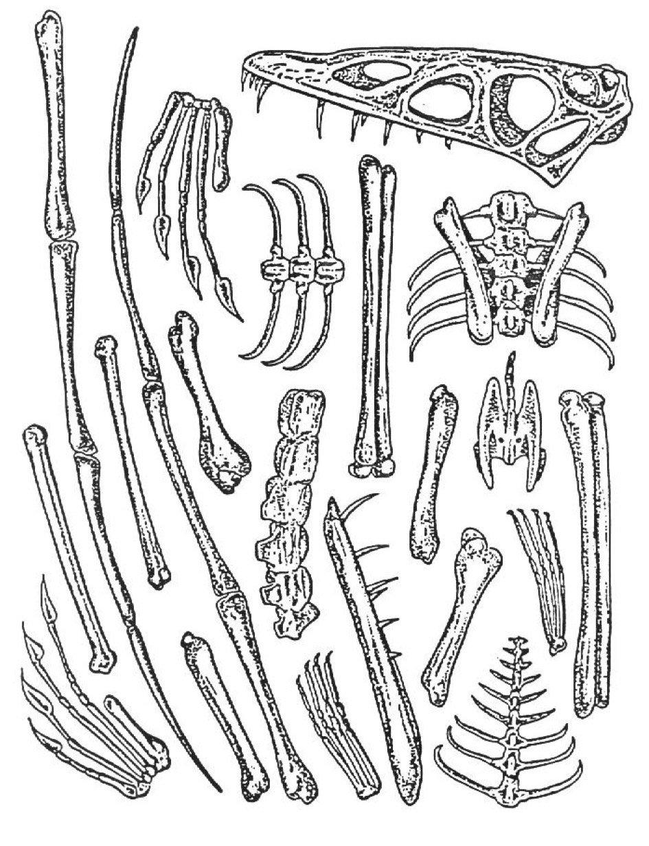 Reconstructing Fossil Bones