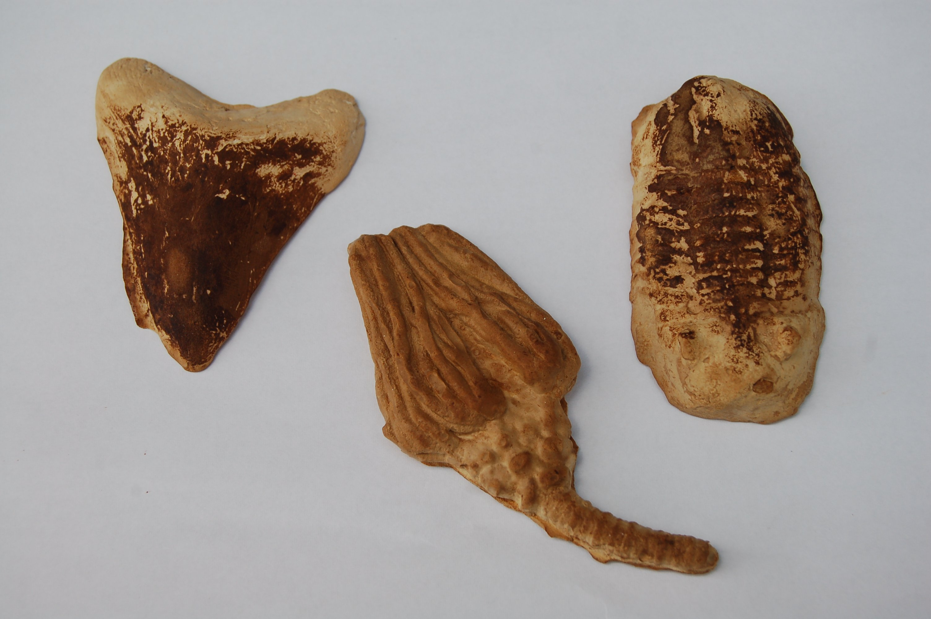 Fossil Casts